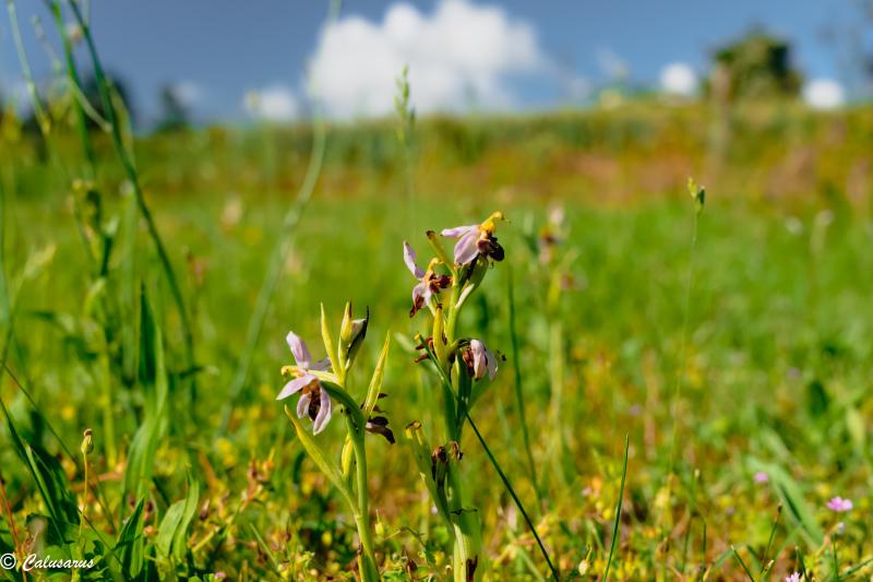 drome 26 Pizancon Fleurs Nature