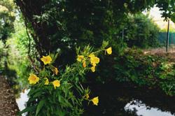 Drome Valence 26 Nature Fleurs