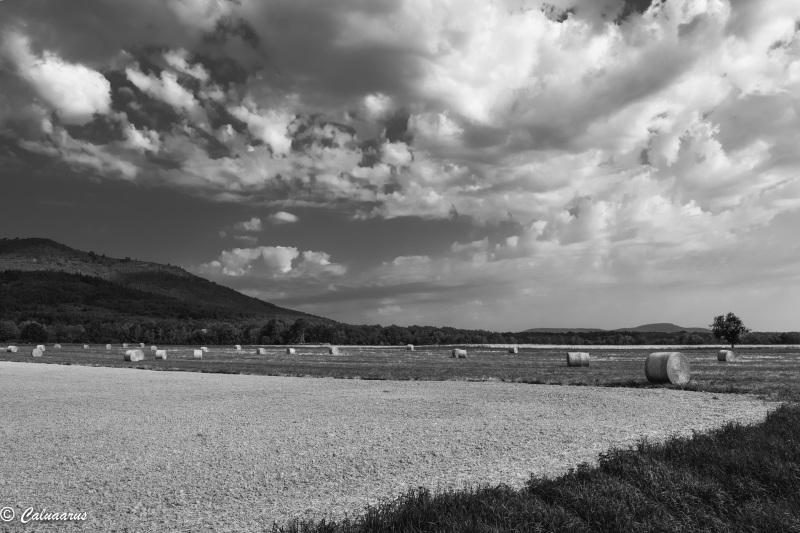 Alsace N&B Paysage Landscape Wattxiller BnW