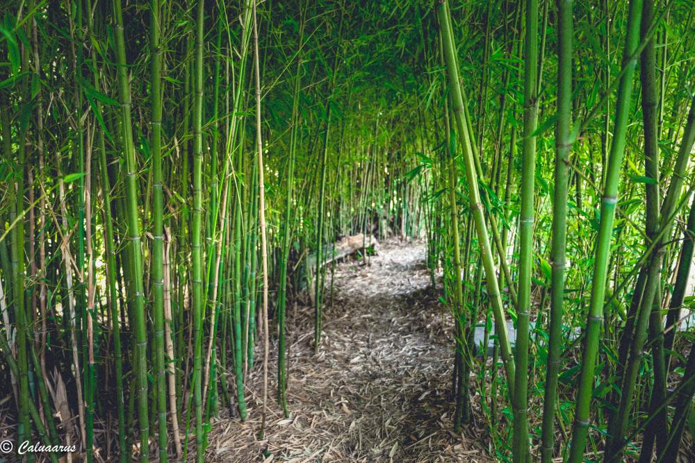 Nature Arc-Et-Senans Bambou