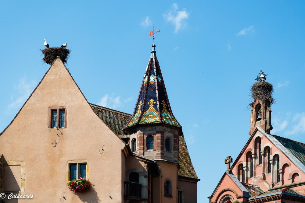 Alsace Architecture Eguisheim cigogne