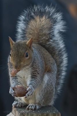 Cafe au Squirrel