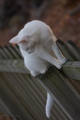 Feline Contemplation