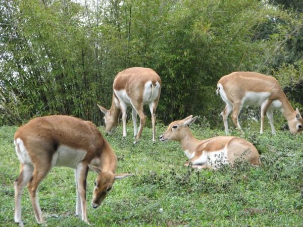 Bambi(s)