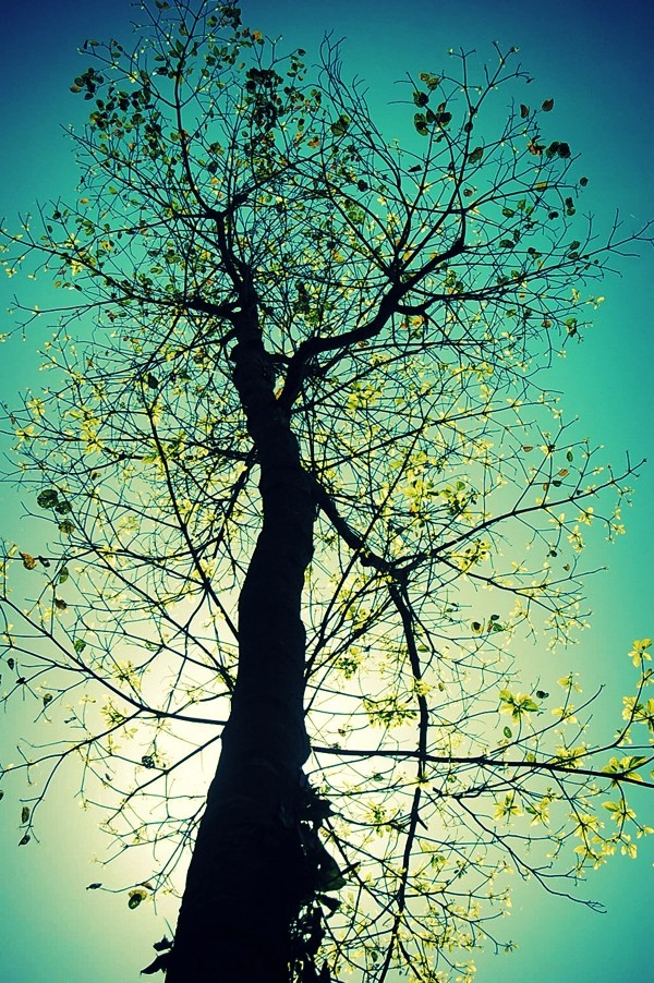 Noon Shot of a Tree at Atulayan Island