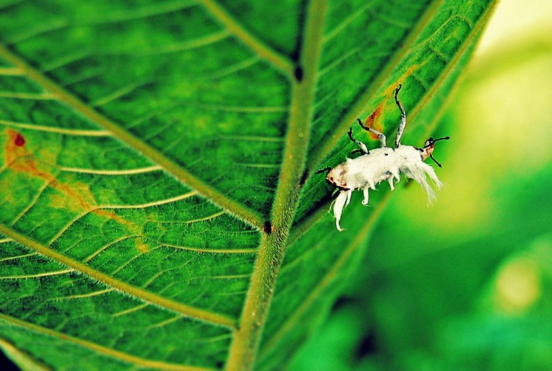 Insect on a Leaf at Dhio Endheka Spring Resort
