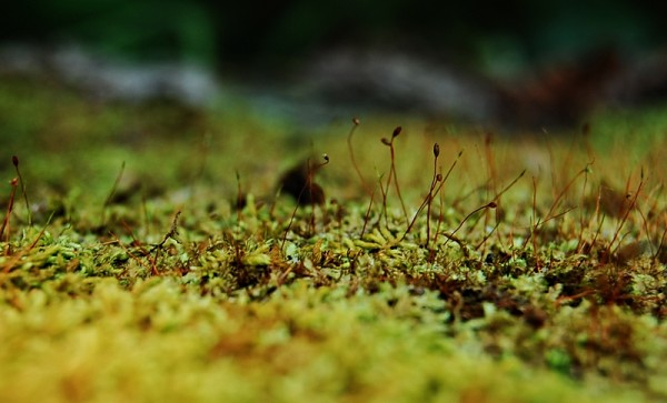 Moss at Forested Atulayan Island