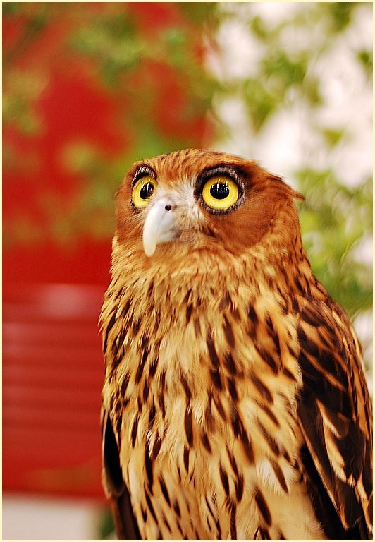 Avilon Zoo's Owl