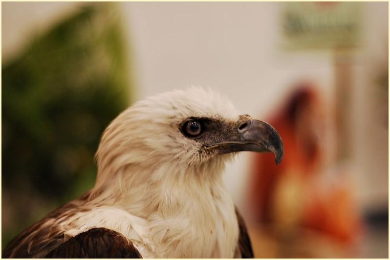 Avilon Zoo's Hawk on Display