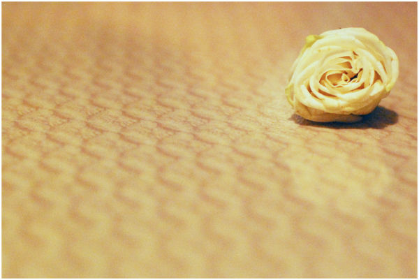 White Rose on Table Pattern