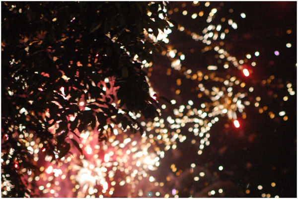 Fireworks Behind a Tree