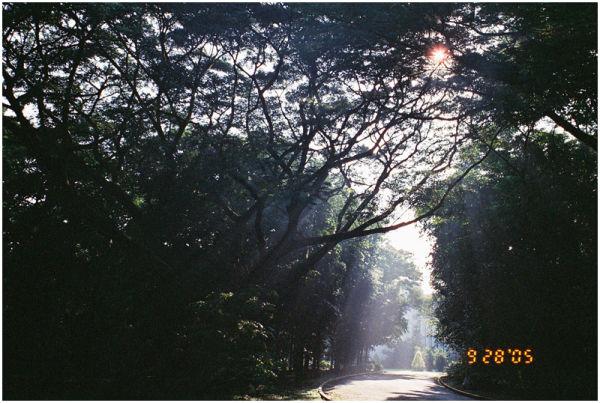 acacia morning sun ateneo