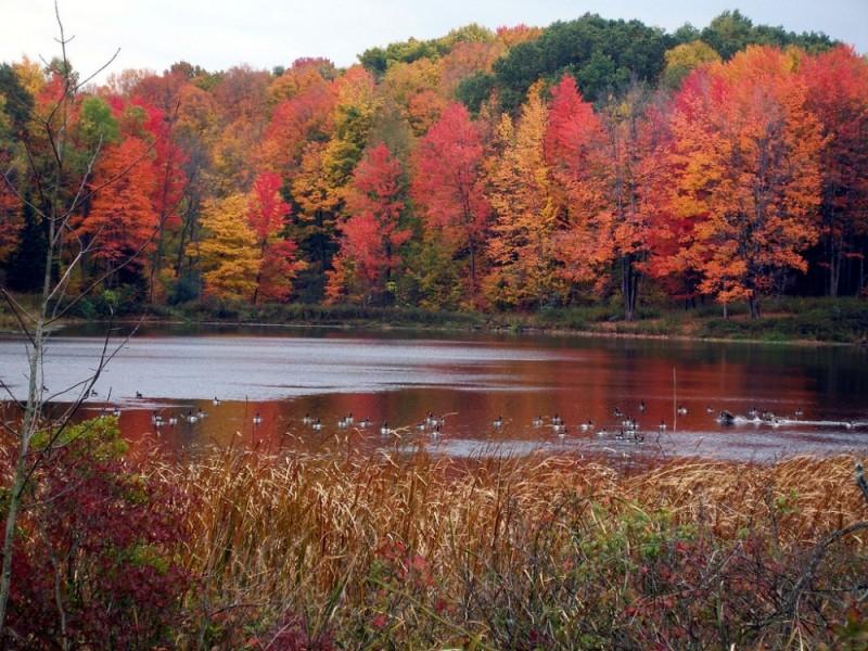 Peaceful Sanctuary In Autumn