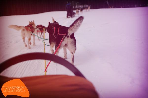 Nordic trek [3]