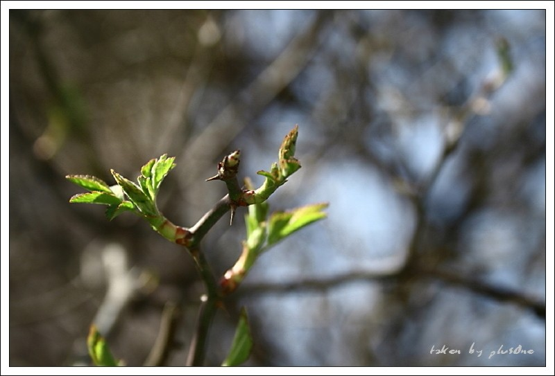 Spring Sprout