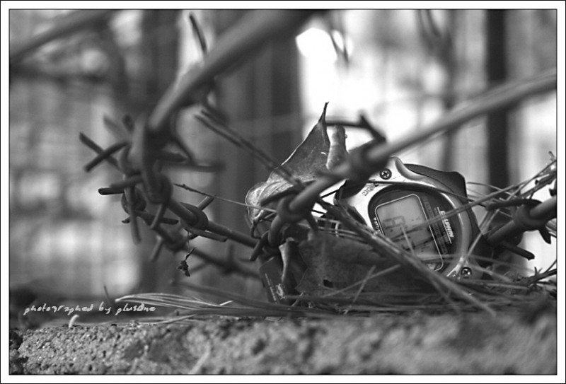 Time Caught in the wire entanglements