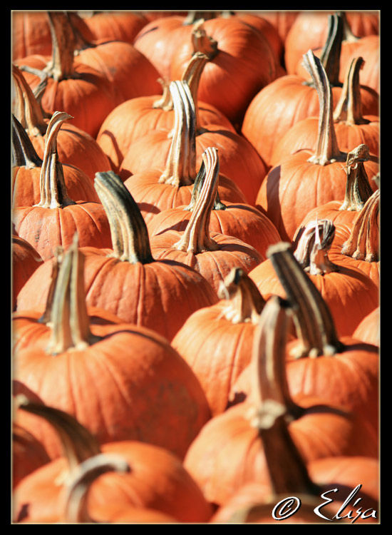 It's all about the pumpkins