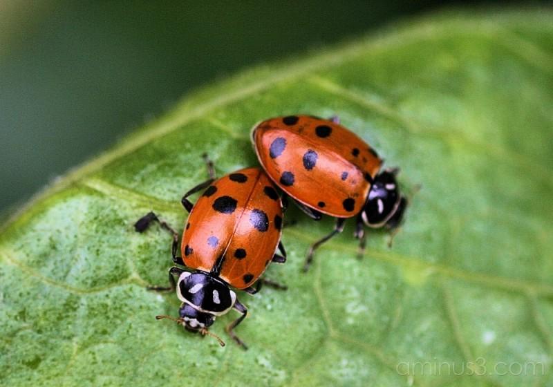 Ladybug, Ladybug fly away home