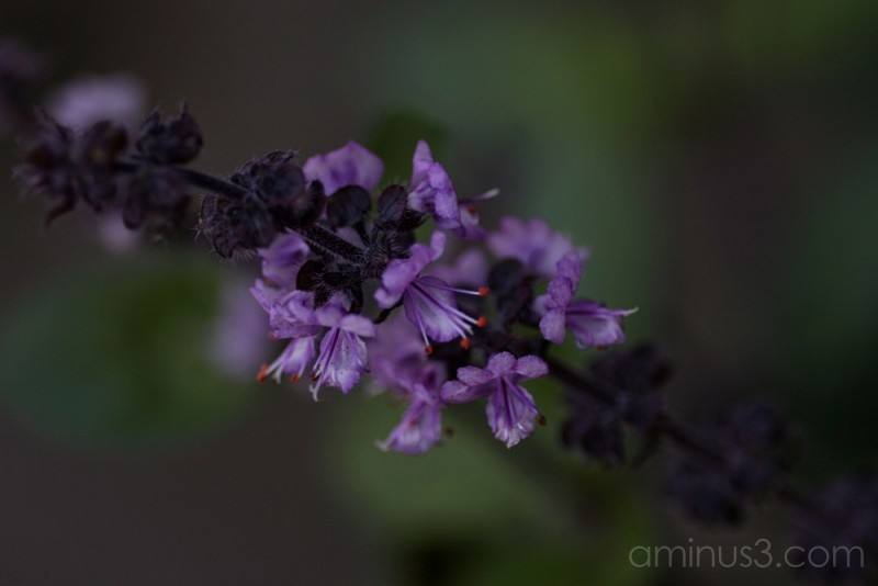 Close up of tiny purple flower