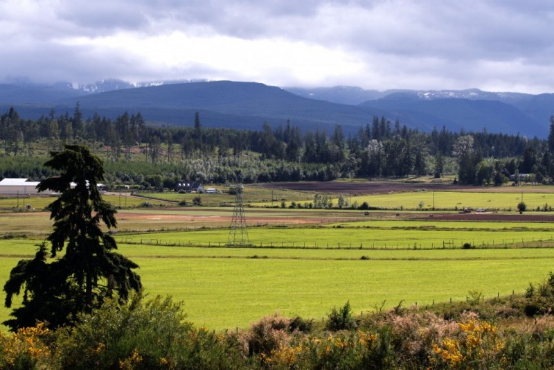 pastoral farmland