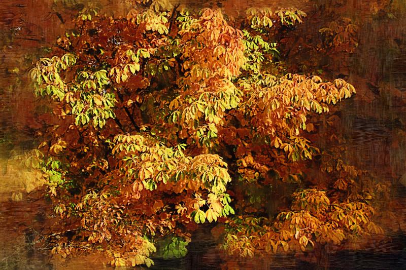 Painted trees ii
