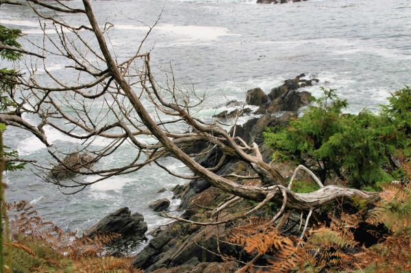 Knarled Tree
