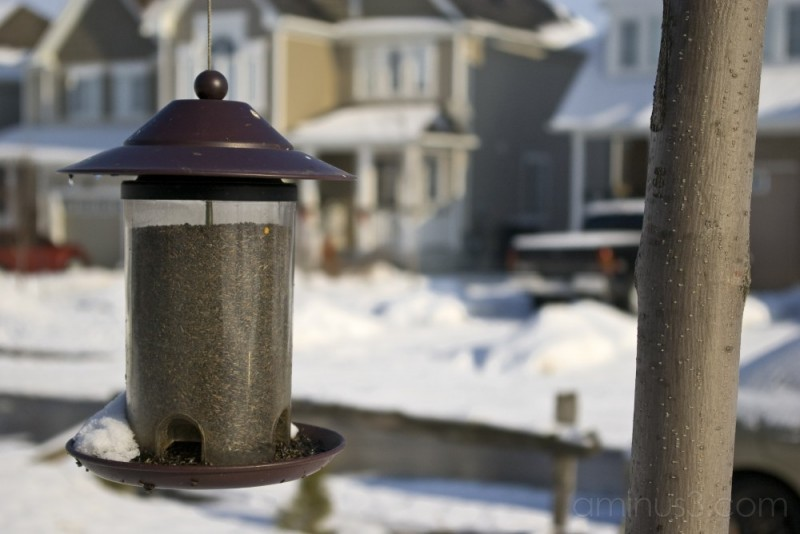 Bird feeder in the winter snow