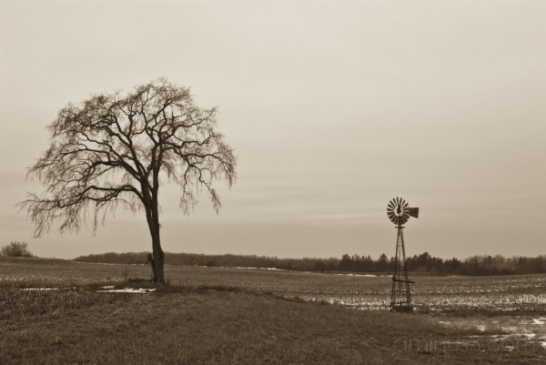 Lonely tree in field with windmill.