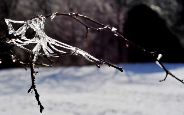 Araignée fossilisée !