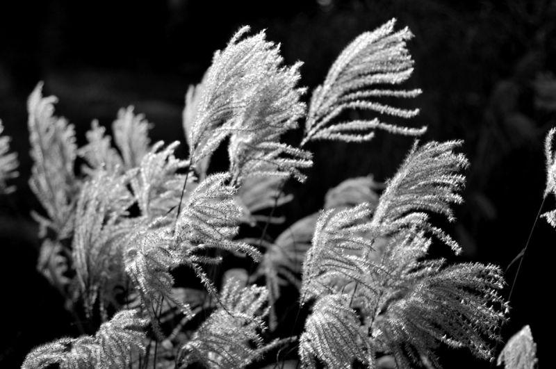 Dancing in the Winter Winter