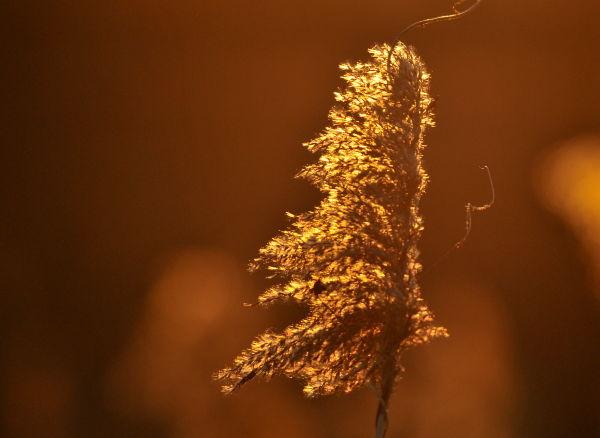 D'or et de lumière....