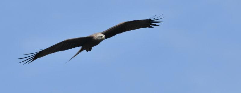flying hunter... 2
