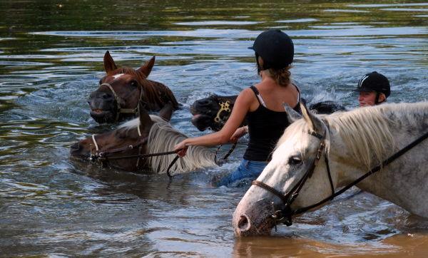 Nage en eaux troubles....
