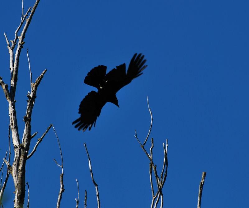 Déployez vos ailes et envolez-vous....