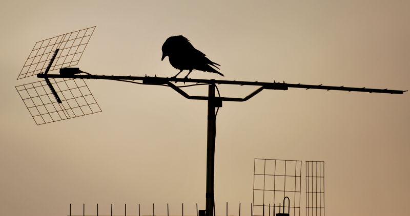 Maître corbeau...