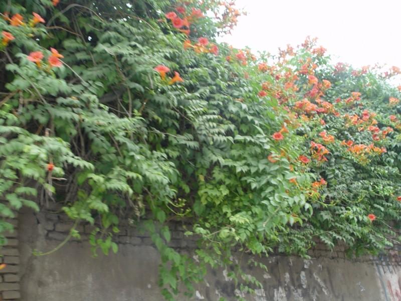 Flowers(3) in babolsar