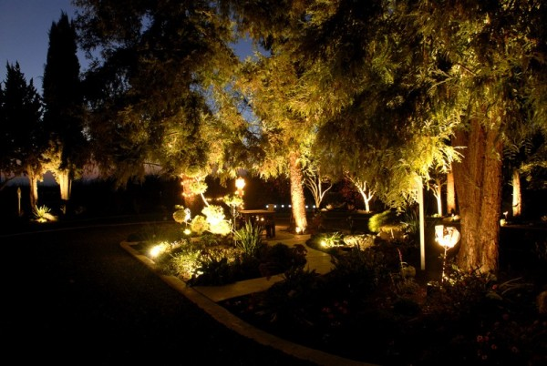 Lighted Plants