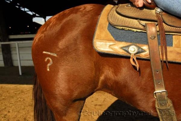 Equine rump