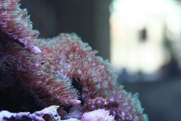 Coral in my House