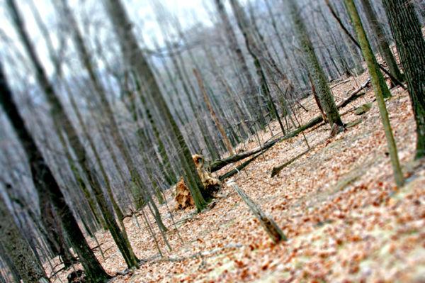 Trees, West Virginia, 2009