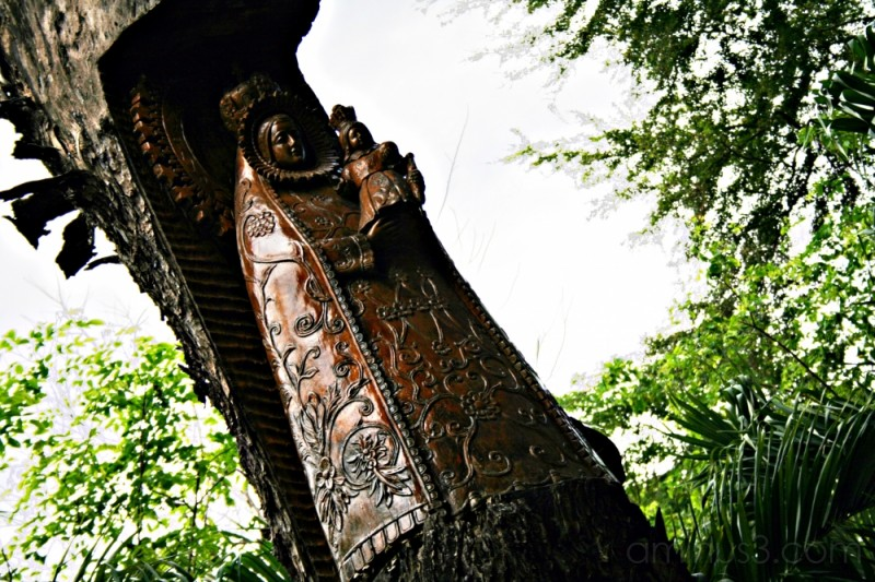 mahogany Madonna
