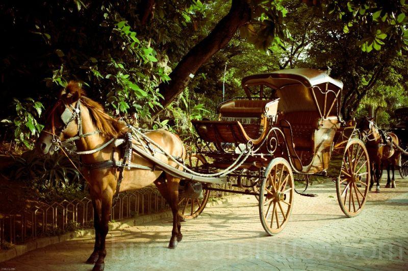 Karwahe (Carriage) 2
