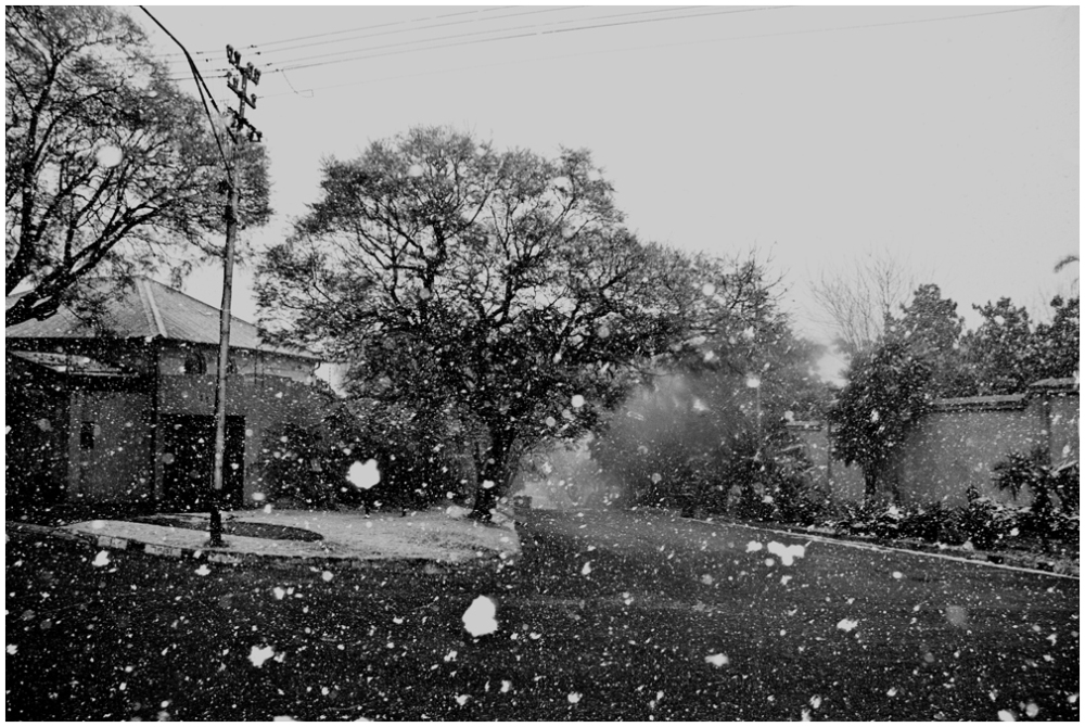 dancing snowflakes in Jozi
