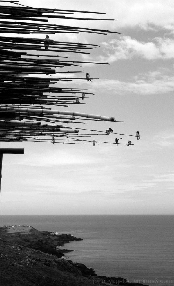 Punta del Este Uruguay, birds and ocean