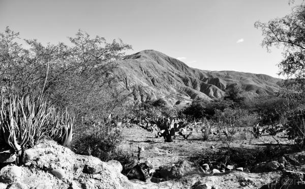 Paisaje seco del Chota