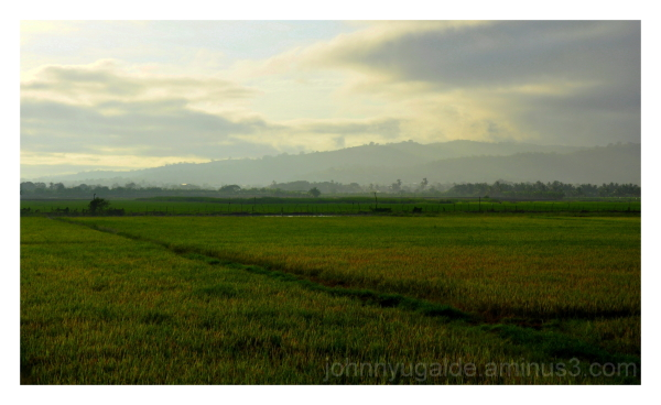 Dawning at the rice field