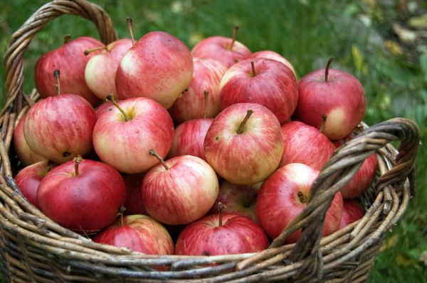Same apples, little closer