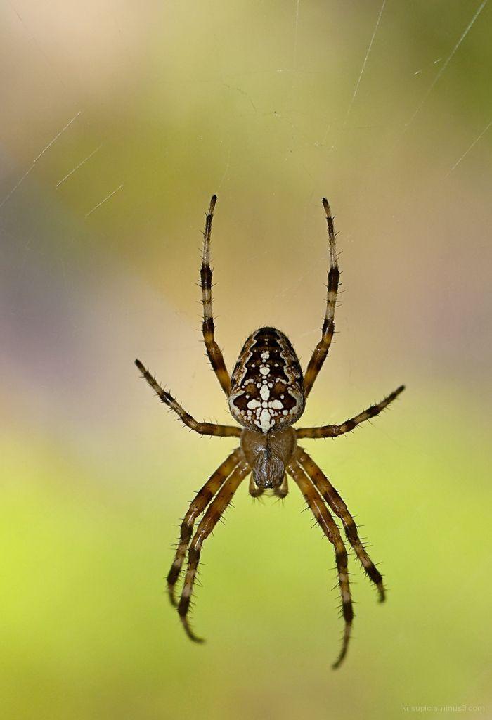 Itzy Bitzy Spider