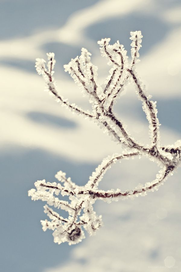 winter diamonds