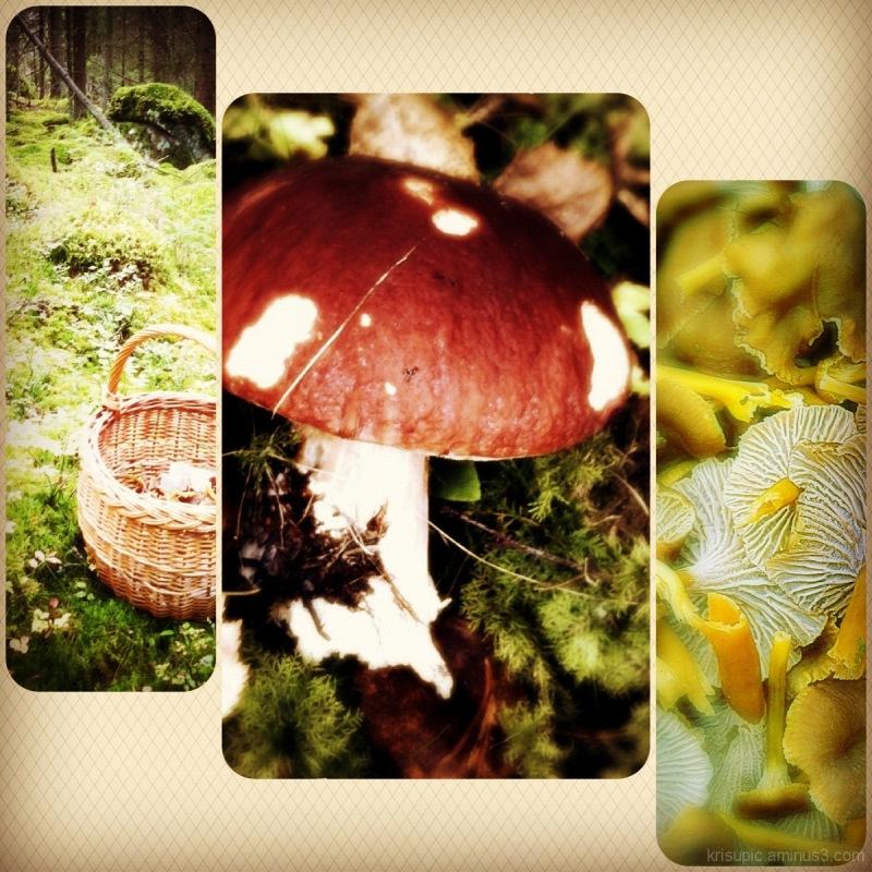mushroom hunting today